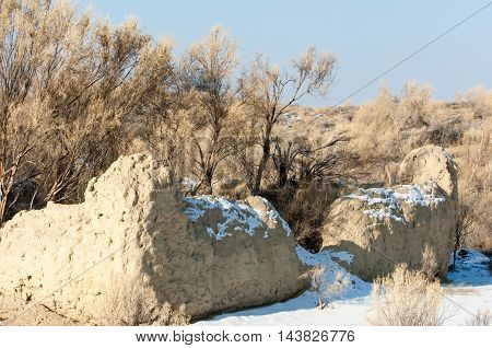 steppe prairie veld veldt. Bright sunshine spring in the desert