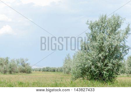 Steppe, Prairie, Veld, Veldt