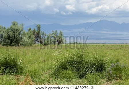 steppe prairie veld veldt. synonyms: plains grasslands. open uncultivated country or grassland