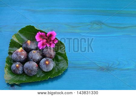 Several ripe blue figs and pink flower on big mulberry leaf over blue wooden background view from above with copy space