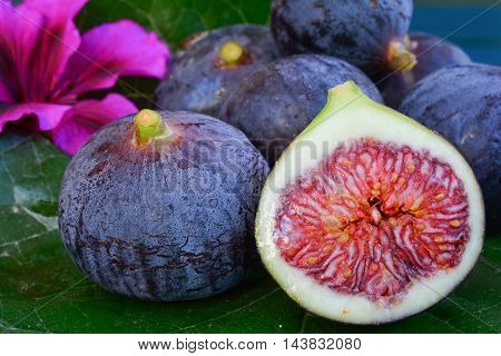 Several ripe blue figs and pink flower on big mulberry leaf over blue wooden background sidr view cross section close up