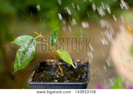 Watering plant in garden
