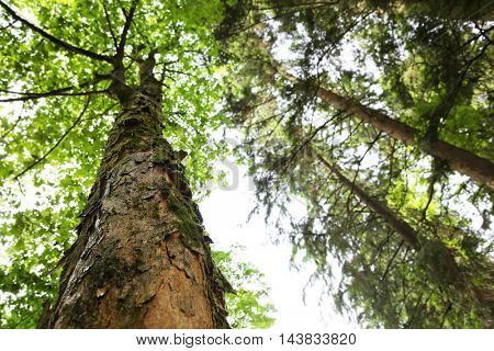 Top of tree in forest