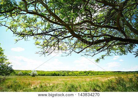 Green hills under blue sky