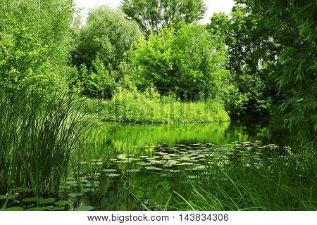 Landscape of forest pond