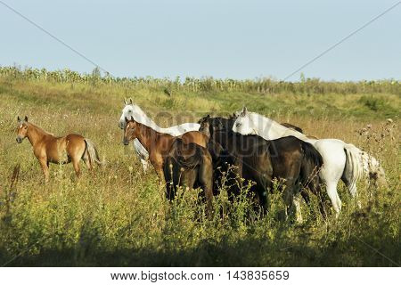 herd of horses walking in a field on the green grass
