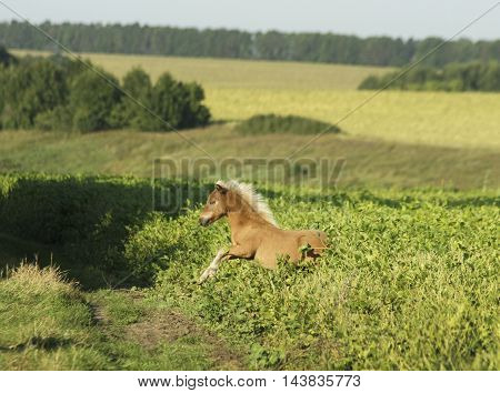 small pony standing in a field in the high green grass
