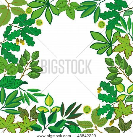 Vector square frame with different leaves from different trees