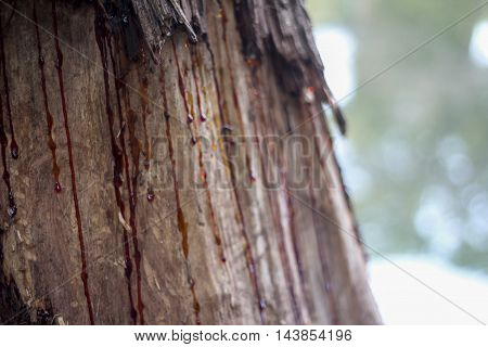 Red sap running down the side of a tree trunk.