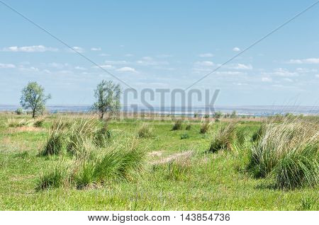 steppe in early summer nature, grass, steppe, landscape,