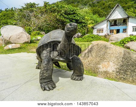 Scene facing a curios, very friendly giant land turtoise in front of a modest house on the island La Digue, Seychelles in Juni 2013.