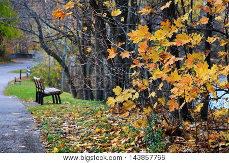 The few remaining yellow leaves and a park bench along a walking path on a wet and rainy late autumn day Sharon Woods Southwestern Ohio USA