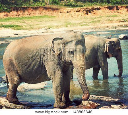 Pinnawala Elephant Sri Lanka River Safari