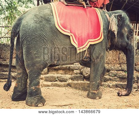 Elephant Jungle Trekking Kingdom Of Cambodia