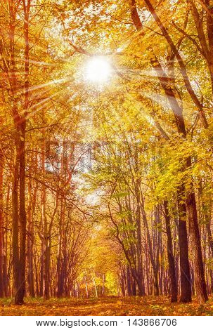 Autumn Seasonal Vintage Nature Background