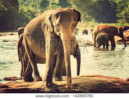 Elephant Orphanage, Sri Lanka