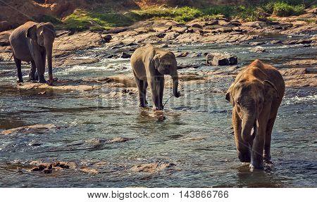 Elephant Wild Vintage Nature Background