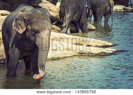 Waterhole Elephant In River Outdoor Leisure