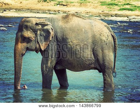 Elephant In River Vintage Nature Background
