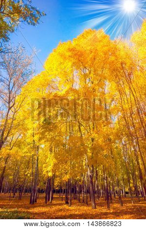 Autumn Seasonal Nature