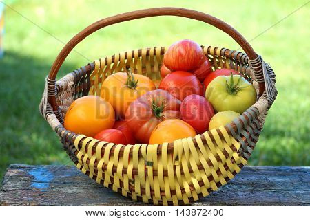Large ripe tomatoes of different varieties are in a wicker basket