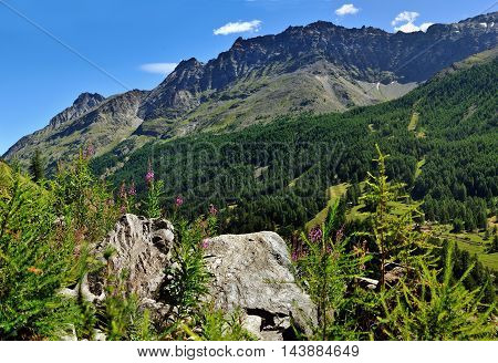 view on alpien stones and flowers in valley