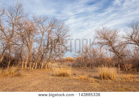 Lonely Tree In Early Spring