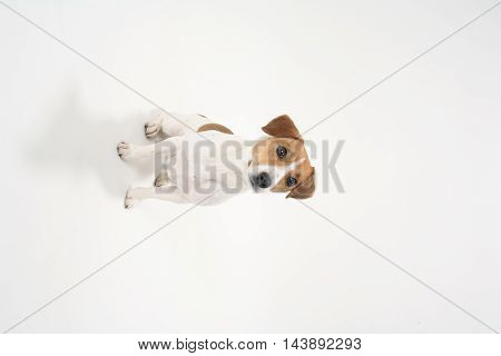 Cute funny dog pet on white background