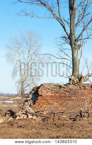 Spring. The Last Snow. Lonely Tree. Brick Wall Broken