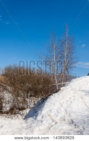 Spring In The Forest, The Grass Withered, The Last Snow, Warm Spring Day, Desktop Wallpapers.