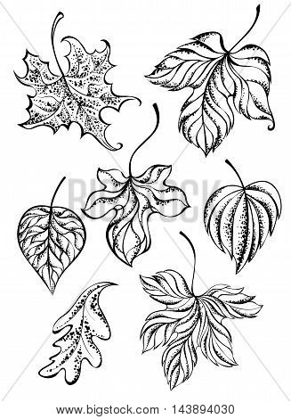 set of painted art tattoo autumn leaves on a white background. Tattoo style. Hand drawn. Sketch drawing