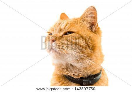 emotional ginger cat isolated on white background