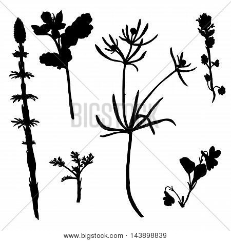Vector set of wild flowers and cereal herbs silhouettes, isolated wild plants, black monochrome floral elements