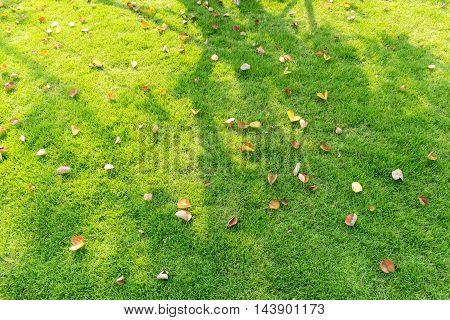 Leaves Fallen On Grass Field