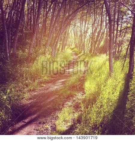 Beautiful path in woods - Instagram filter