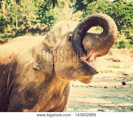 Animal Elephant attraction river nature background Ceylon