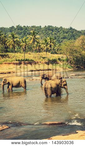 Elephant Attraction River