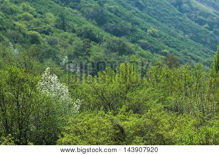 Mountains In The Spring,
