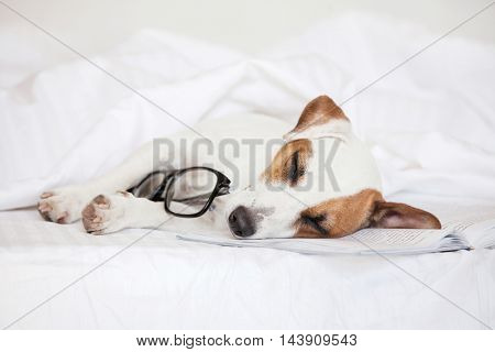 Sleepimg dog with book at home. Fun pet in bed.