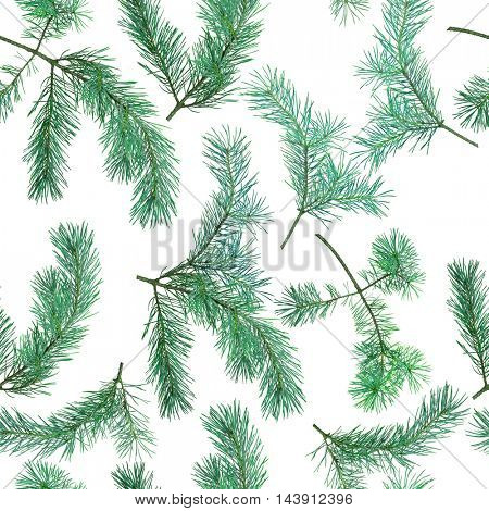 seamless background from blue pine branches isolated on white