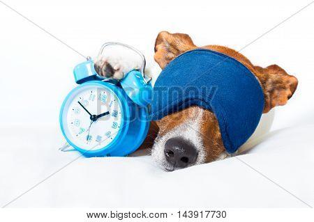 Dog Sleeping With Clock
