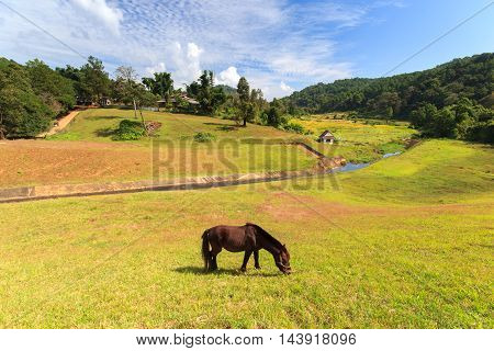 A Horse at Pang-ung lake pine forest park and sunshine day Mae Hong Son North of Thailand