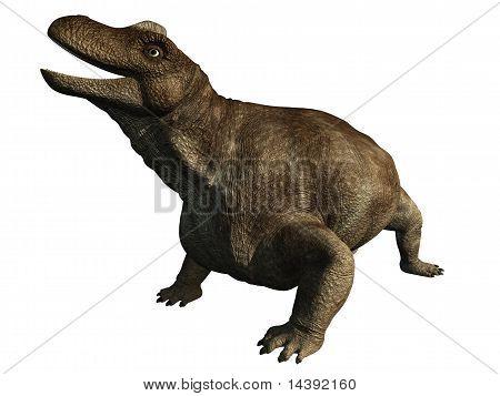 Dinosaurier - Keratocephalus