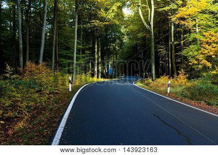 Asphalt road in autumn forest
