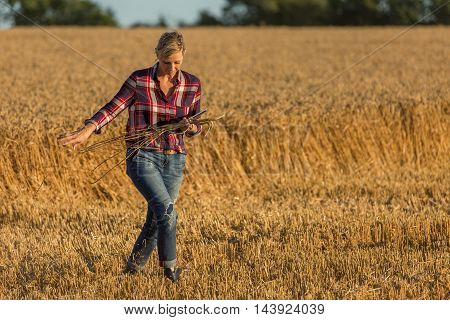 farmer and sanitory technician cheking wheat crop