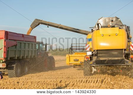 combine harvester in wheat fields with sun