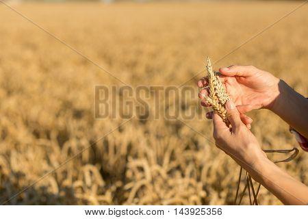 female farmer analysing wheat crop with sun