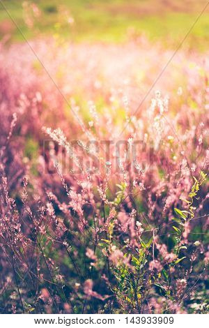 Vintage photo of wildflower field. Sunset sunlight gently toching beautiful flowers an creating amazing lavander color.