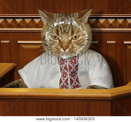 The cat looks like a member of parliament. His face was smeared with sour cream.