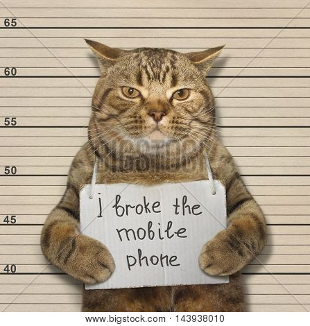 A scottish straight cat broke a mobile phone.